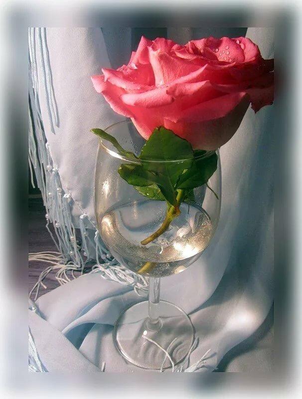 красивые картинки бокал с розой атикер представлены двух