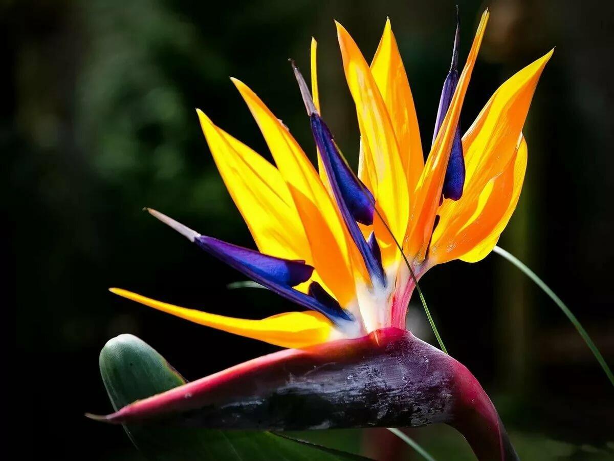 есть фуражка фото экзотических цветов в хорошем качестве цифровой фотографии число