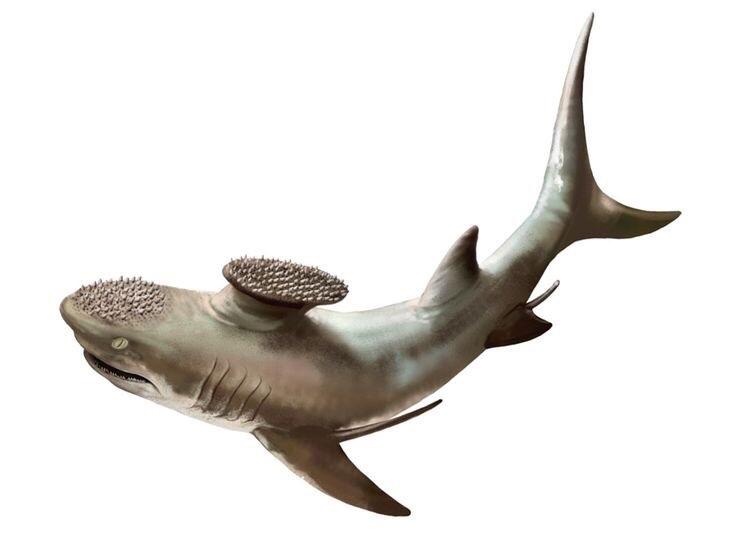 Картинки доисторические акулы