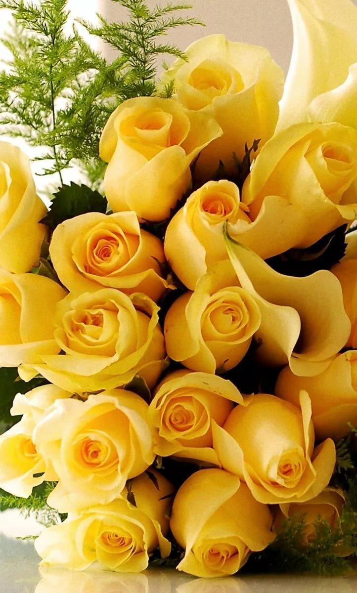 Желтые розы картинки красивые с днем рождения