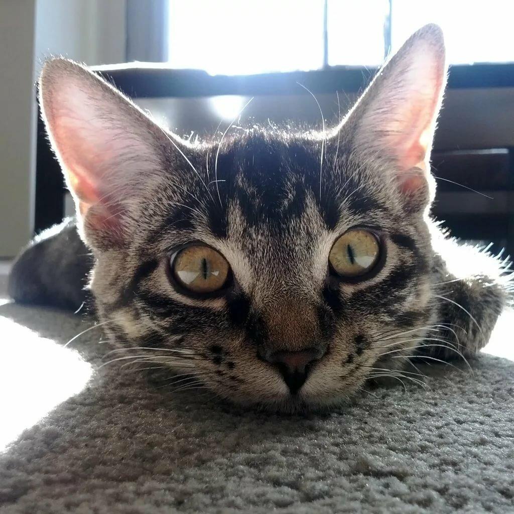 Очень смешной кот картинка, коллеге