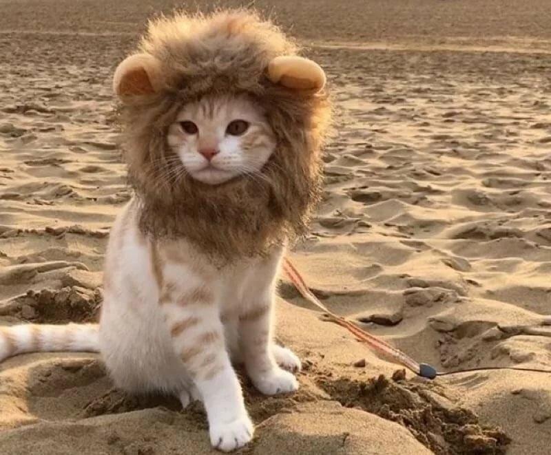 Лев как котенок картинки