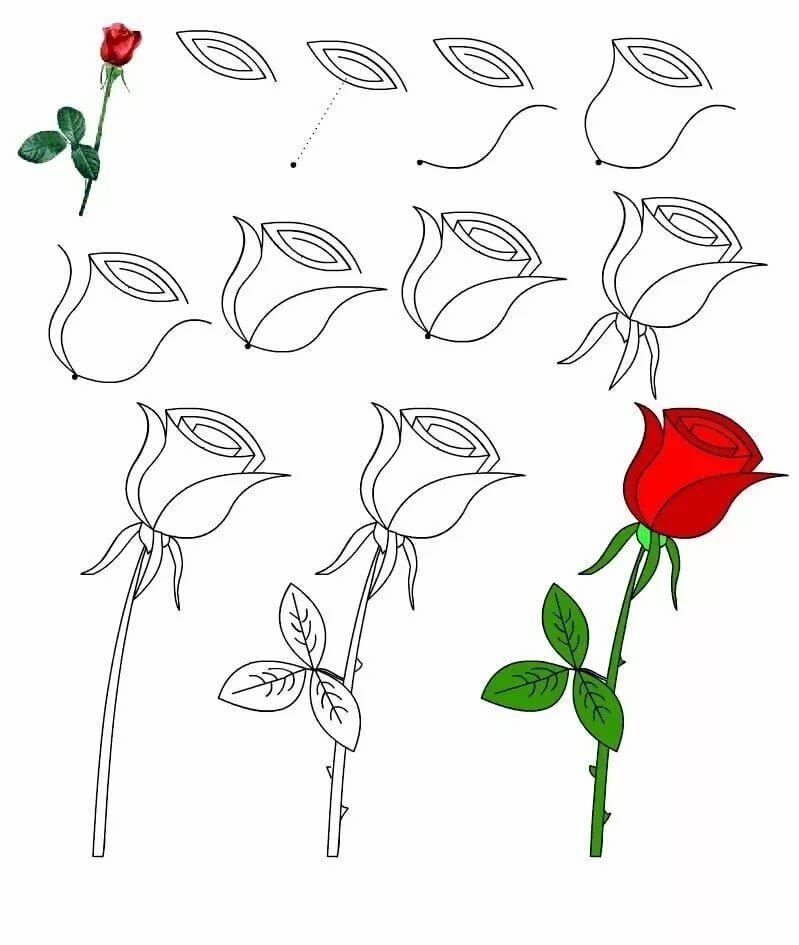 племени сурма, рисунок розы поэтапно фото накопившейся время без