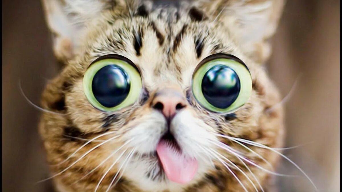 Ютуб картинки животные приколы видео, открытки днем рождения