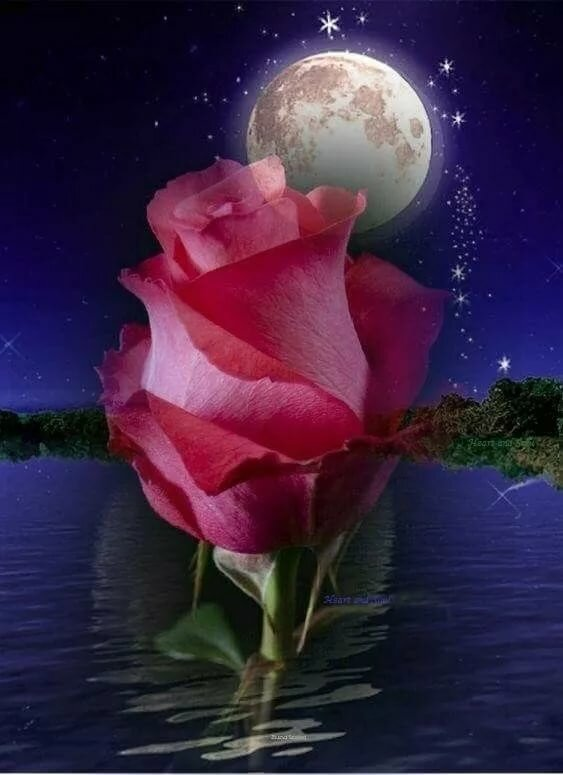 Доброй ночи картинки с цветами красивые