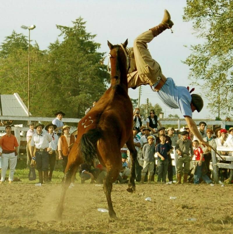 Лошадь бьет копытом картинка