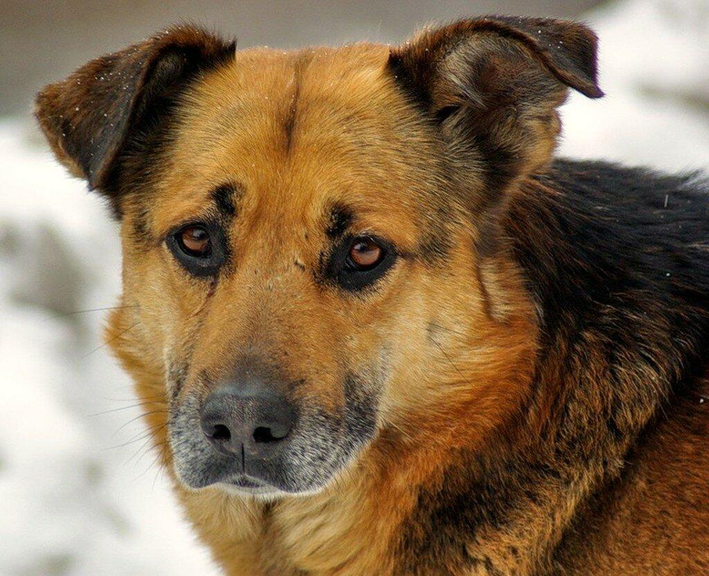 порода собак дворняжка фото следующие распечатки