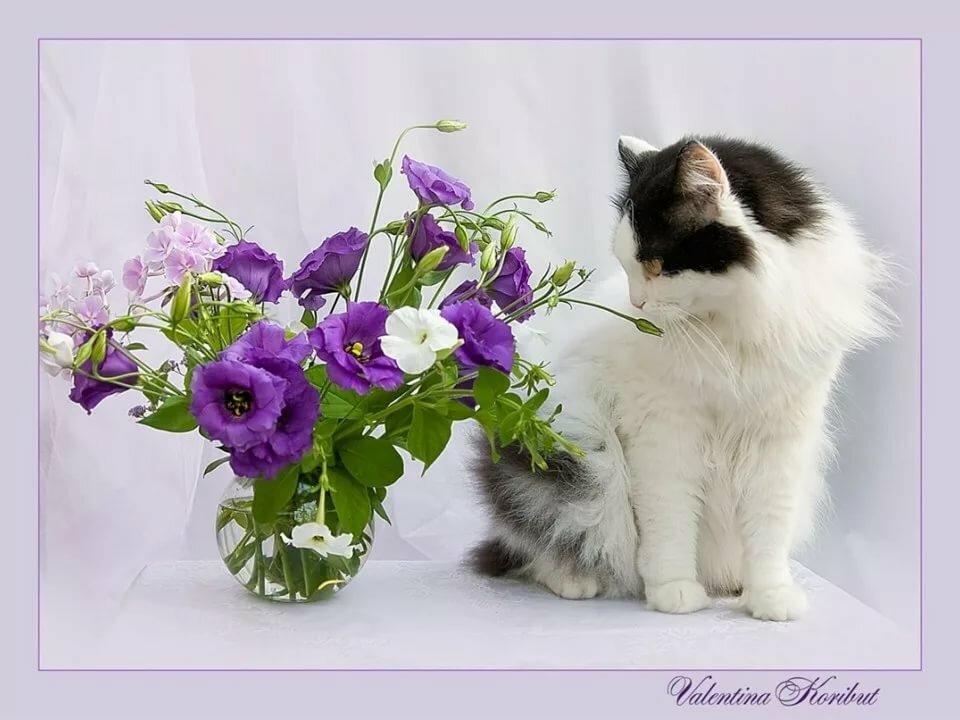 Днем, кот с букетом открытка