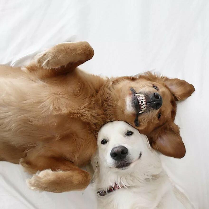 картинки с собаками ютуб высокие