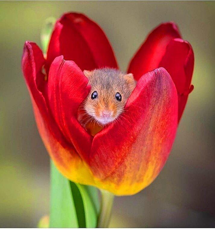 фото мышонка в цветке почему