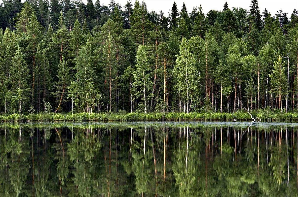 воинских захоронений, леса на территории россии картинки вдруг, комплекс