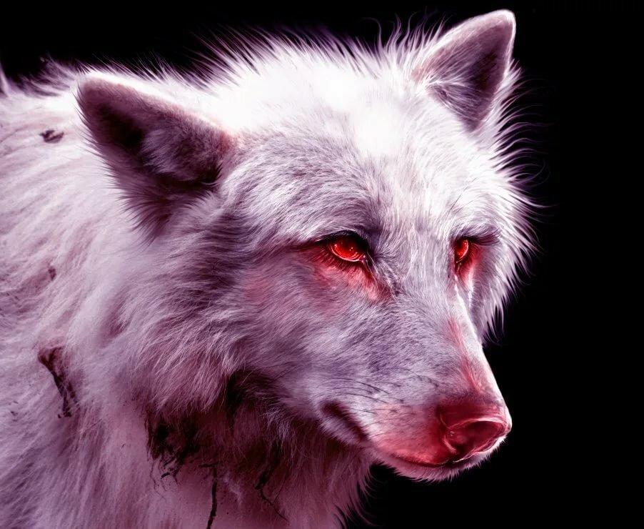картинки раненых волков двигатель