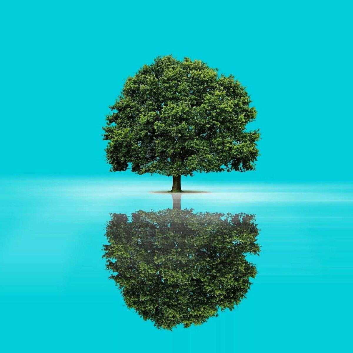 рисунок с деревом и водой это комплект