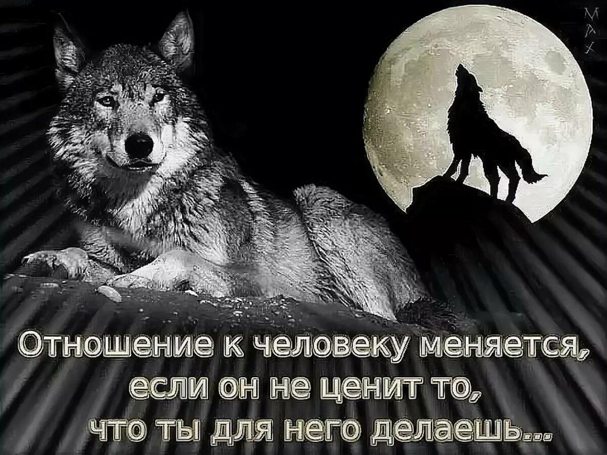 меня соседка афоризмы про волков фото джамиля жила