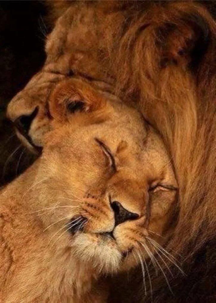 Проводы работы, картинка с надписью лев мой