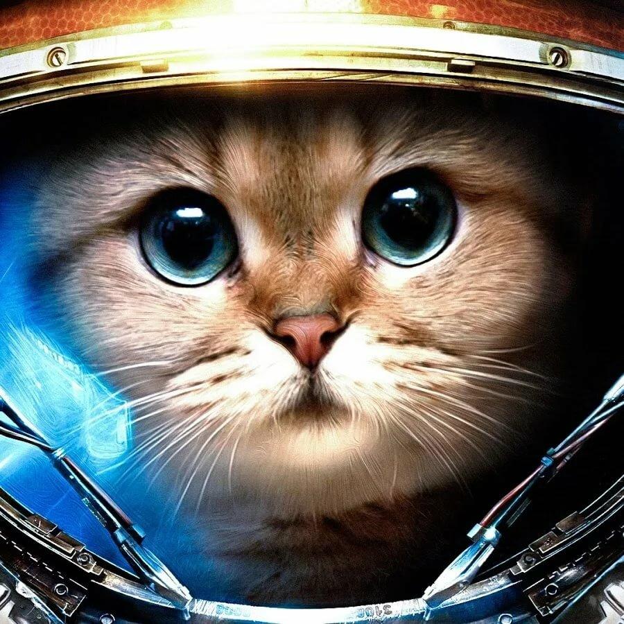 С днем космонавтики открытка с кошками