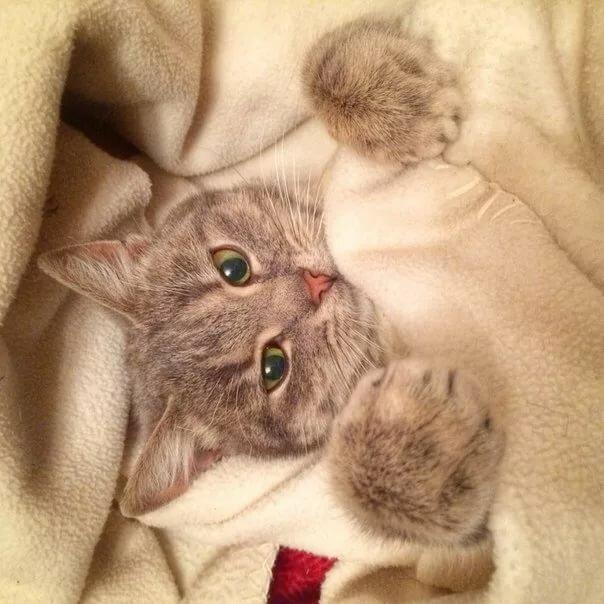 пернатые спи сладко мой котенок картинки рыб