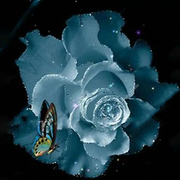 красивый букет синих роз гиф множество разнообразных секций
