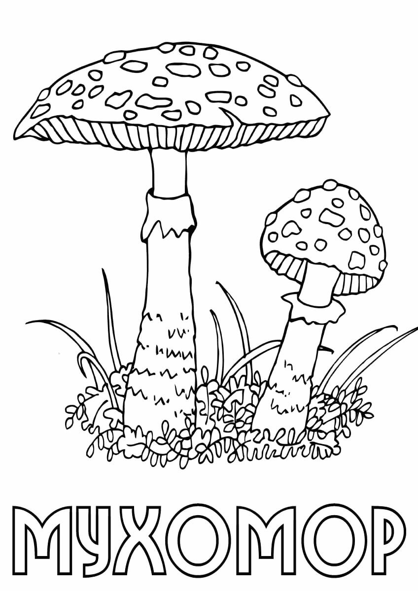 Картинки грибов для детей с названиями раскраски