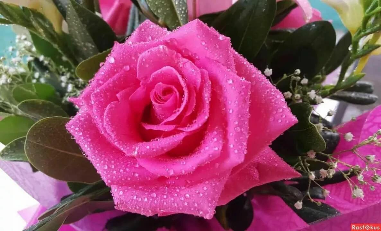 Картинки цветов для хорошего настроения