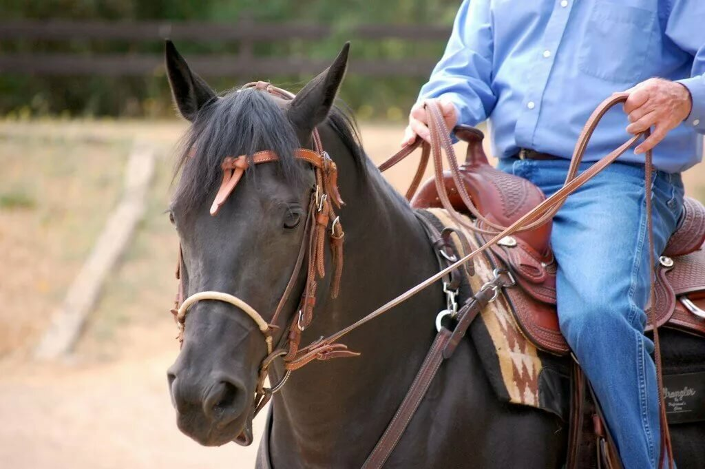 вожжа лошадь картинка номера