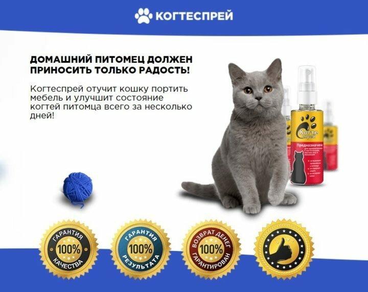 Когтеспрей - уникальный спрей для кошек в Казани