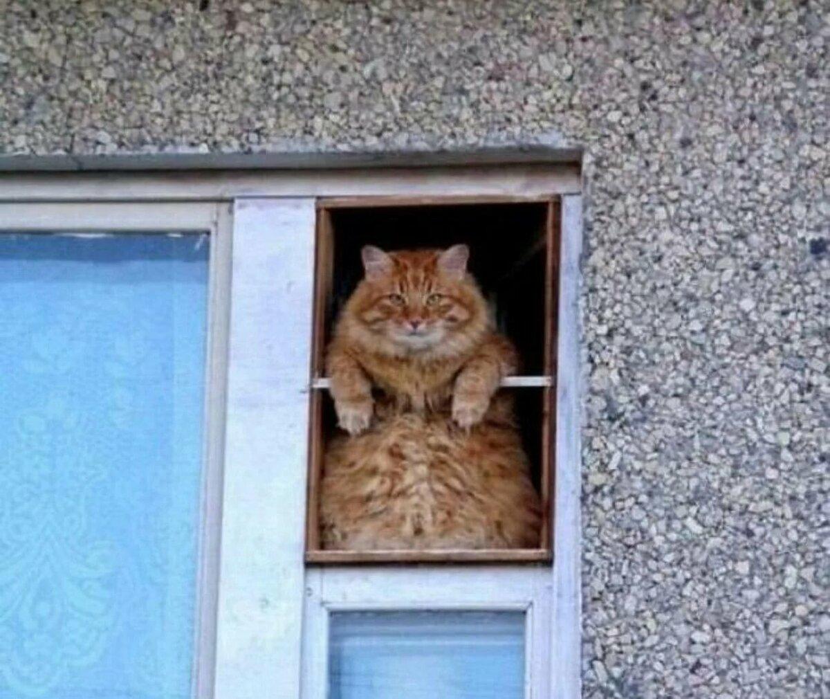 Смешные картинки о окнах