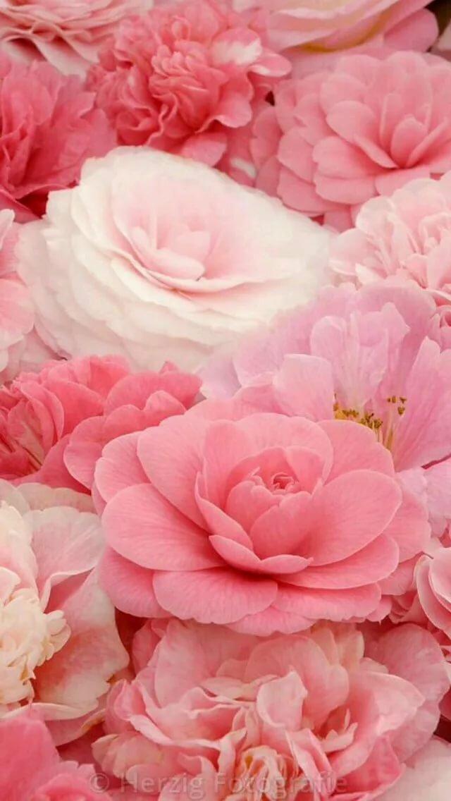 Картинки в розовых тонах на телефон