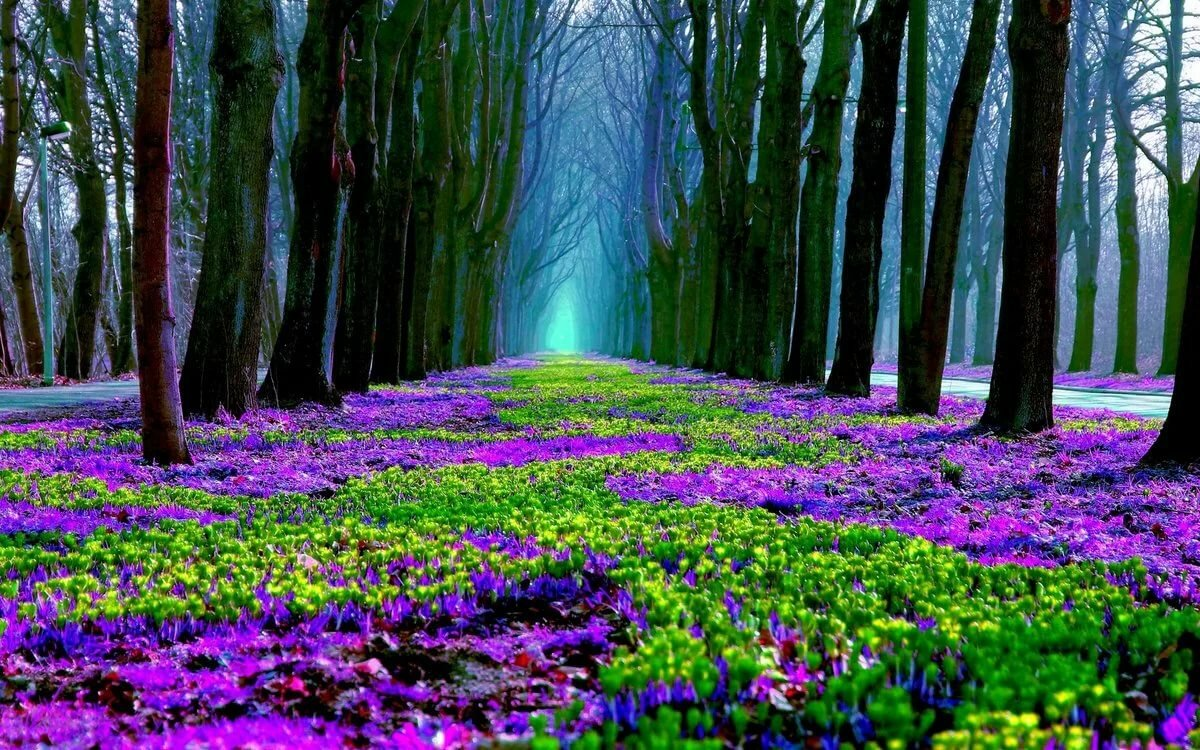Яркая картинка весеннего леса
