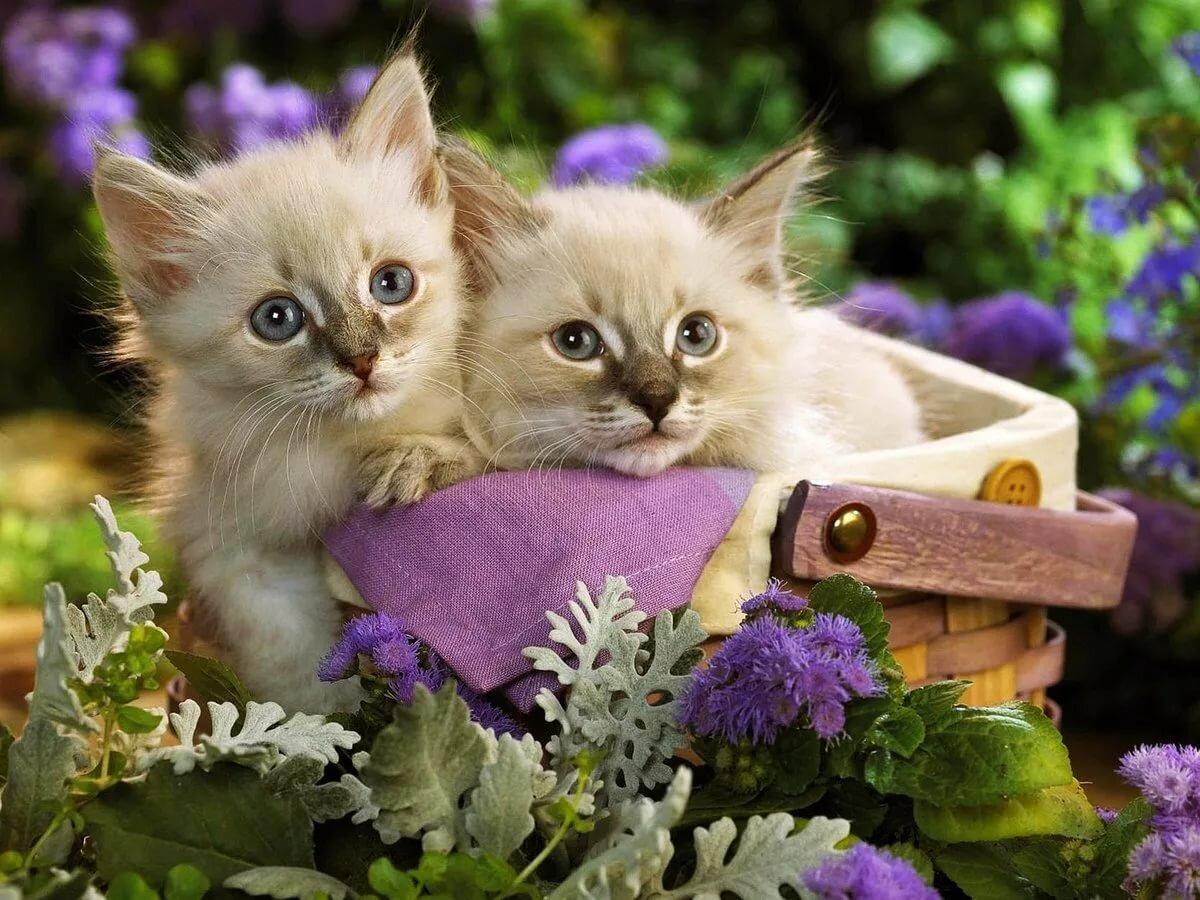 Красивые картинки с животными и цветами