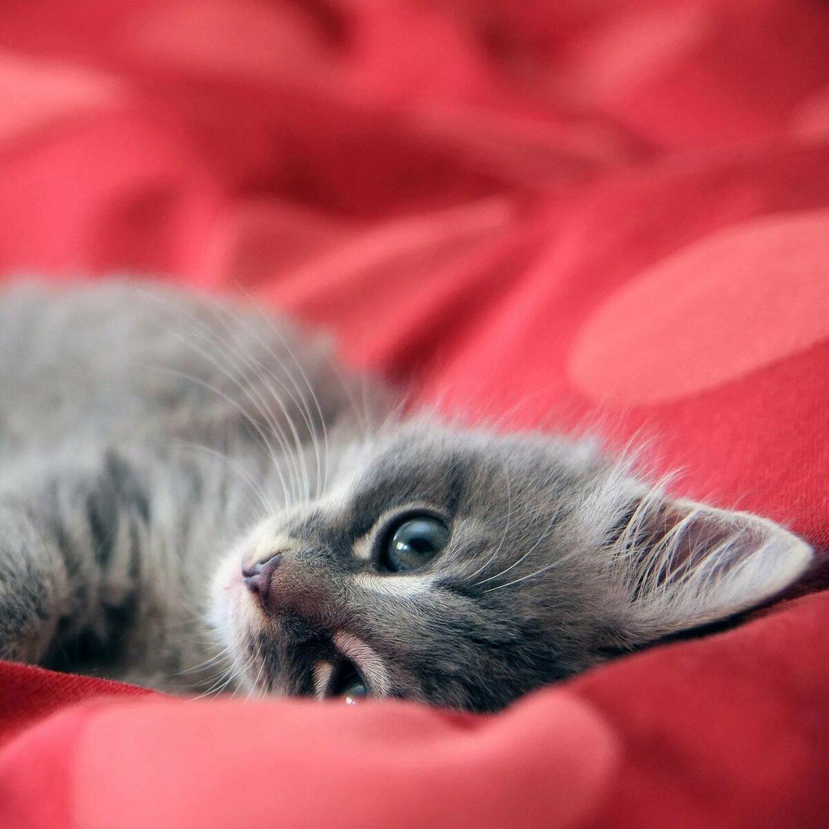 съемку картинки с котятами на смартфон холидей поделилась