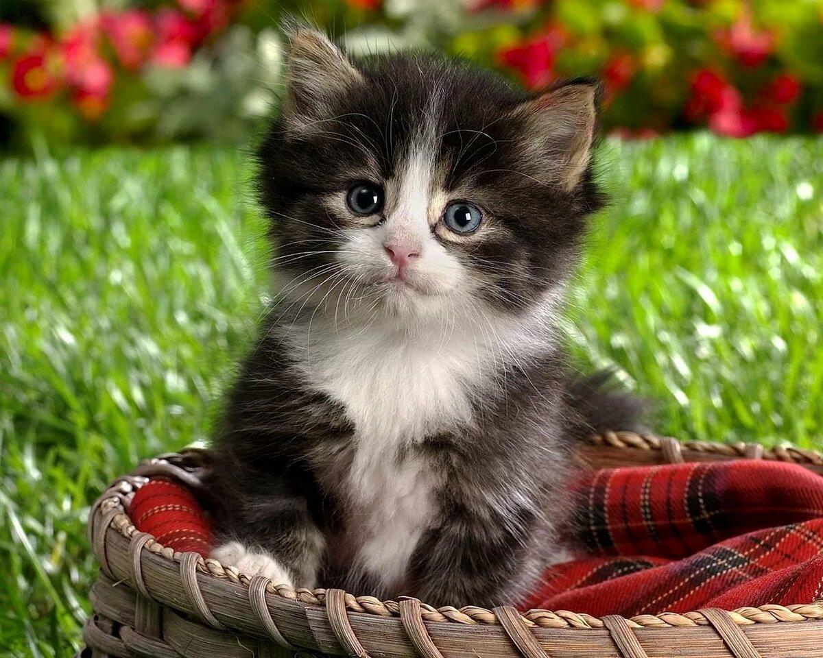 Картинки прикольный котята