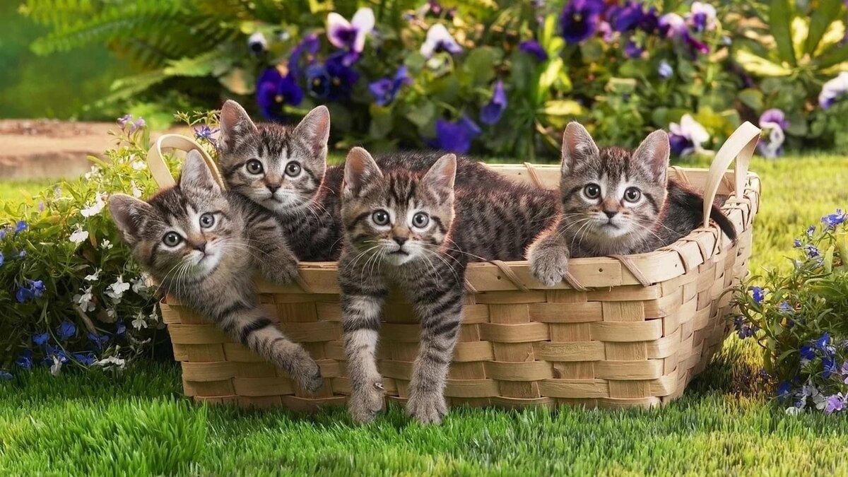 комнатных картинки с четырьмя котятами оформления букет