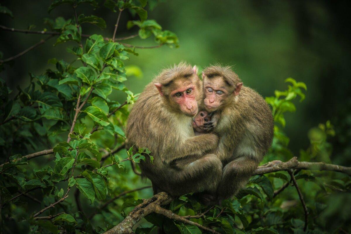 Смешные картинки с двумя обезьянками, бабок