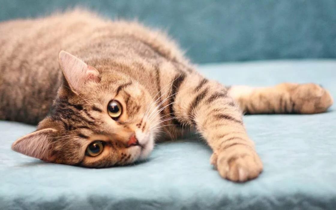 Для, коты картинки онлайн