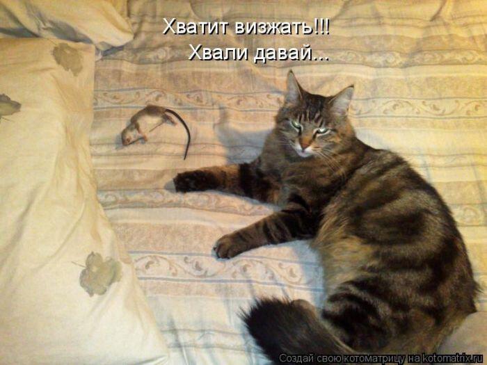 Кошки про работу картинки с надписями, открытка