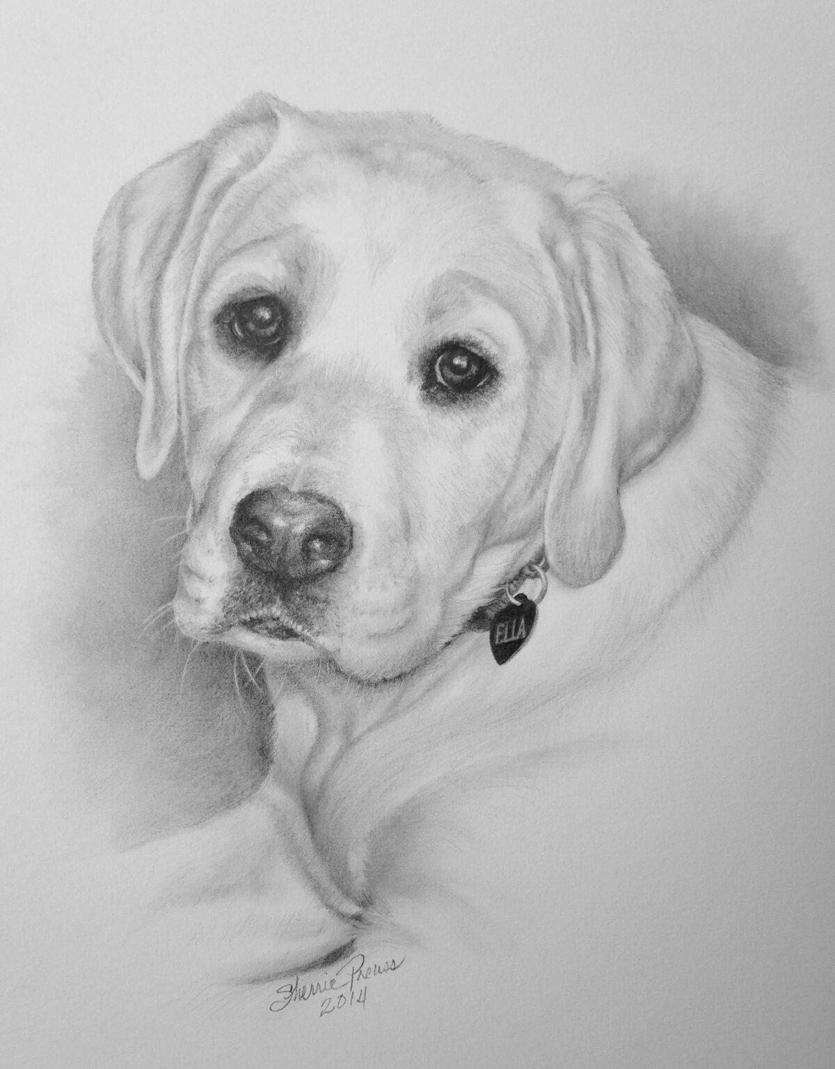 собака карандашом картинка