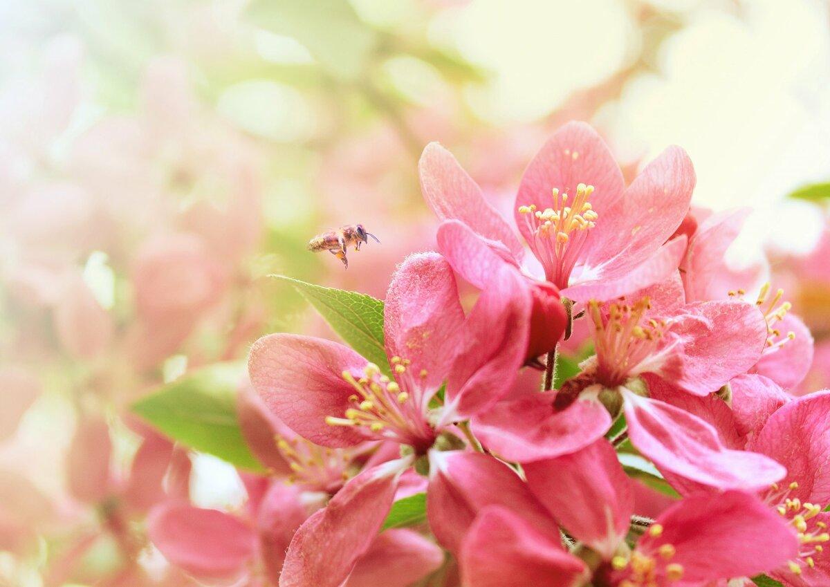 Открытка днем, картинки с весенними цветами