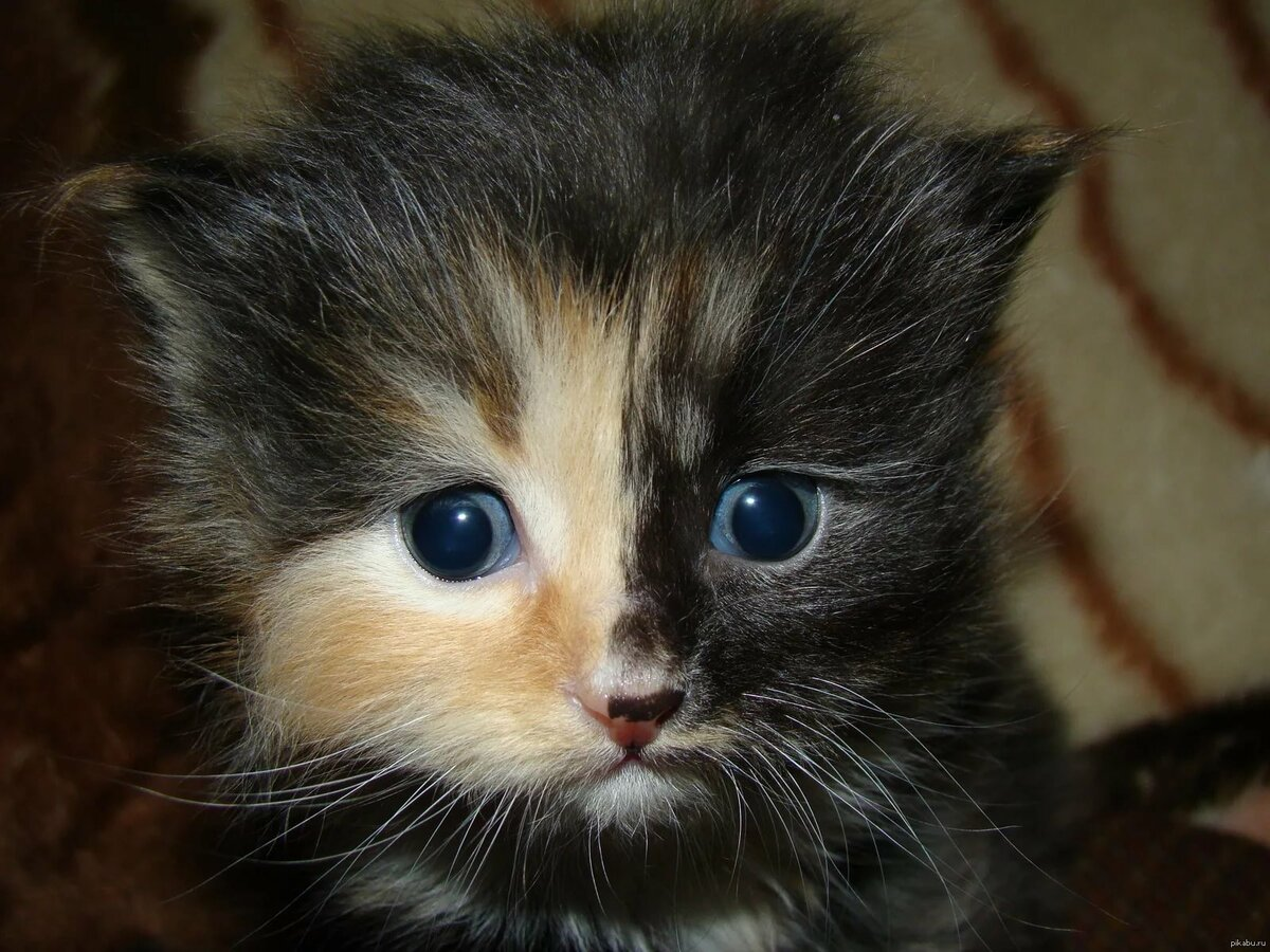 это был картинка я обиделась котенок реальной жизни, так