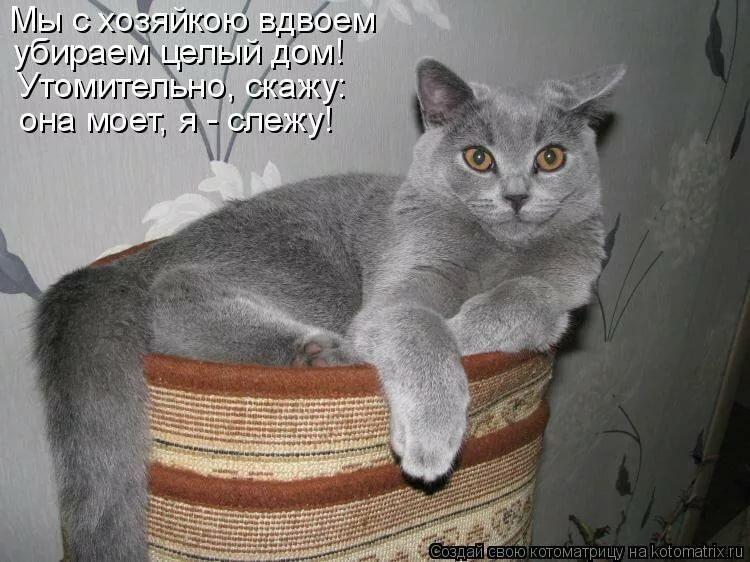 Смешные картинки котов и кошек с надписями смех, электронная открытка