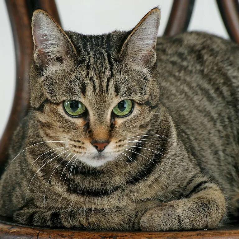 Обычный кот картинка