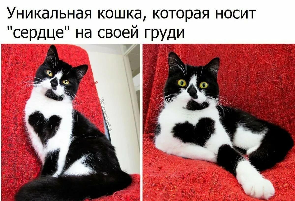 Смешные картинки с очень смешными надписями