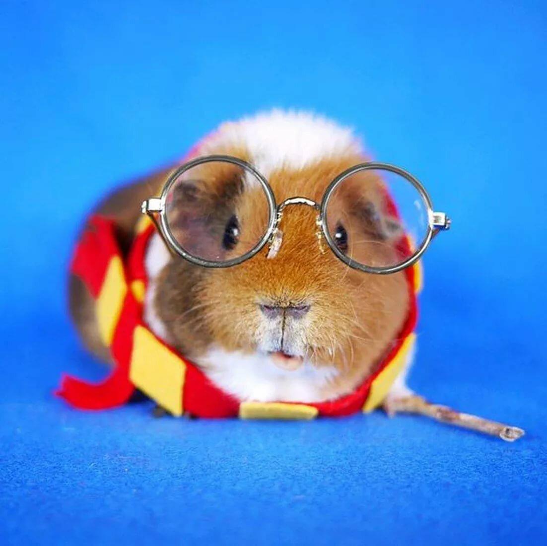 вузы просят картинки свинок в очках дом черпал вдохновение