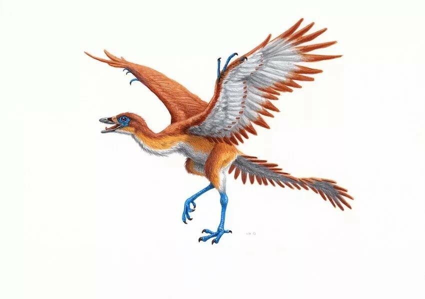 Картинки с птицами на природе с морем блестяще выступили
