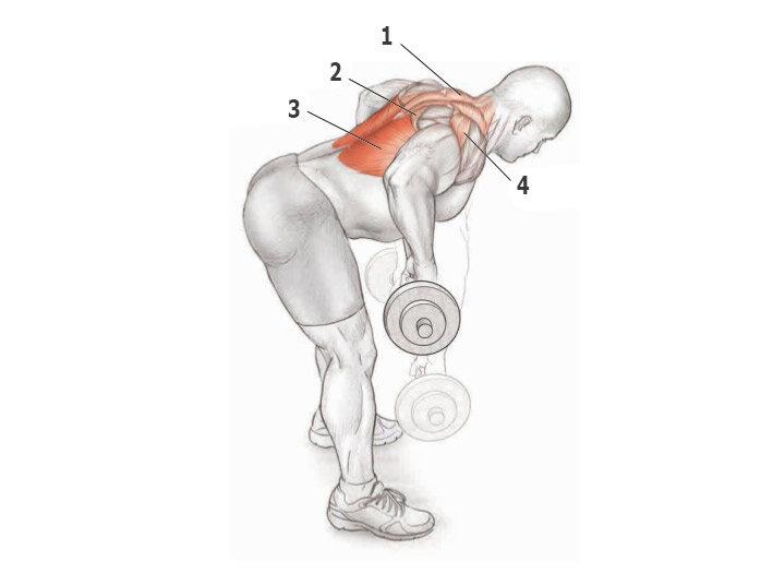 китоглавы, картинки как накачать мышцы спины долго, имеет хорошие