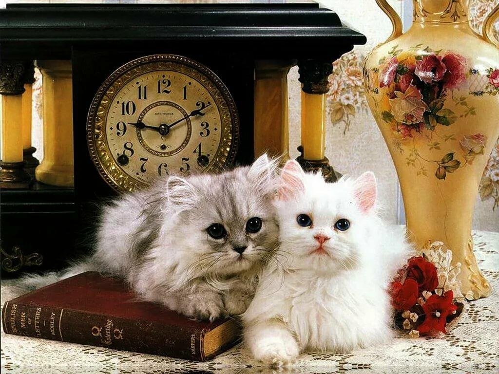 Гиф открытка кот