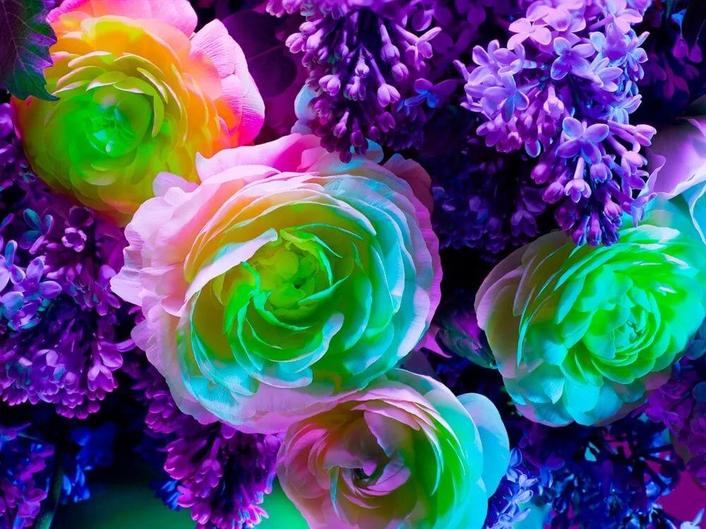 цветы самые яркие картинки называли божественным вечно