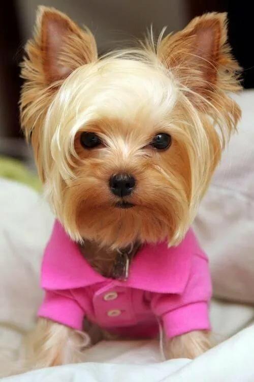 фото домашних собачек маленьких пород