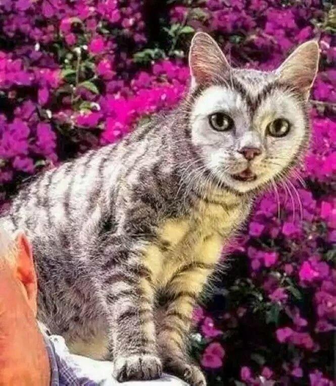 вкусная лапша невероятные коты фото интересно