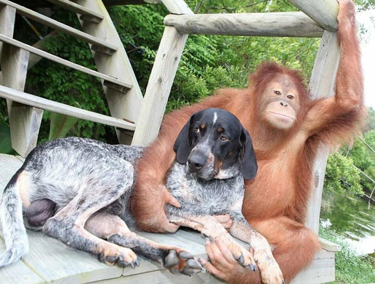 Смешные картинки человек и собака, днем